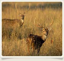 Sariska Wildlife Sanctury
